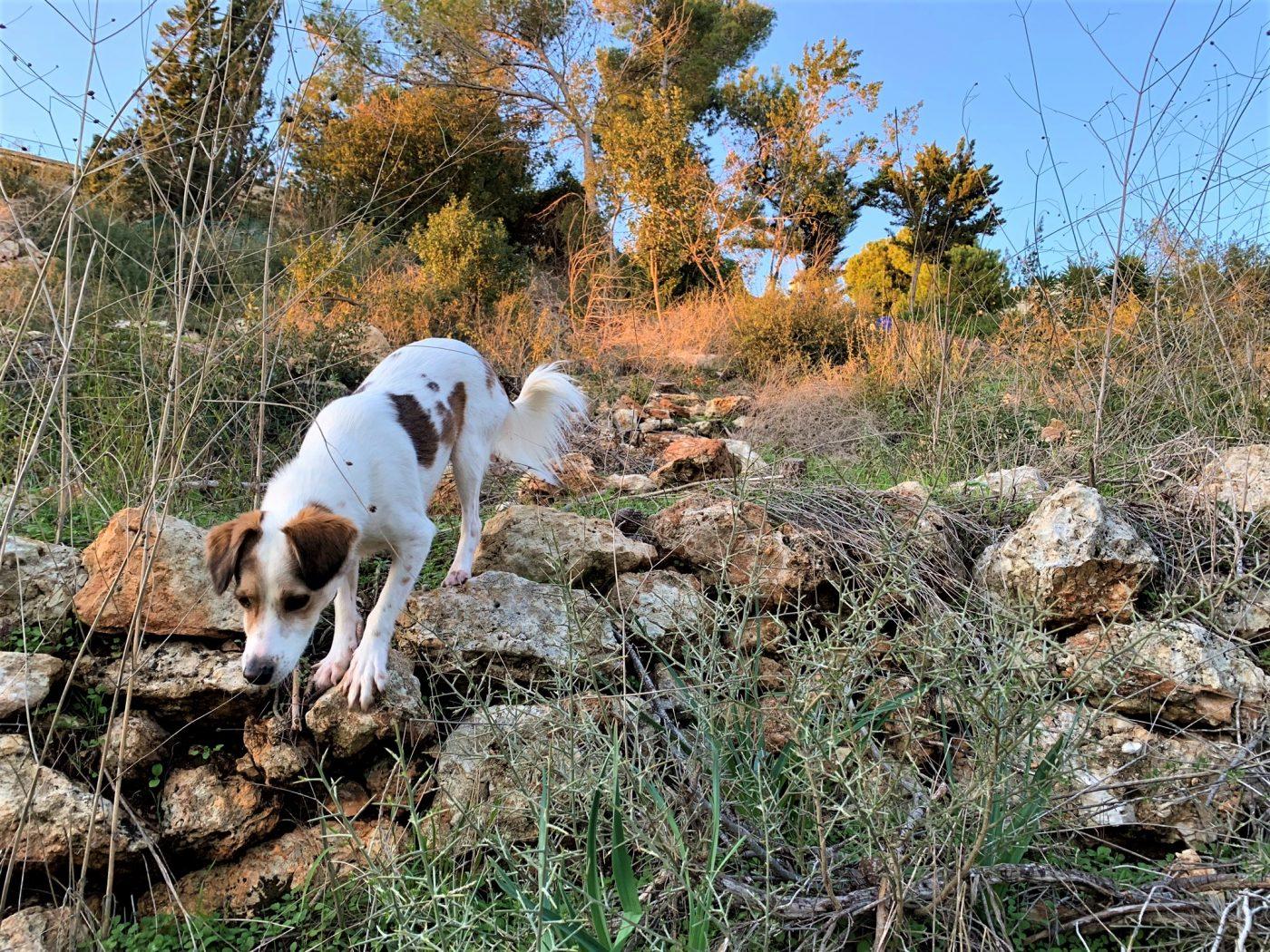 בעקבות נופי הכרמל הקדומים – אל שביל הטראסות של גולדה