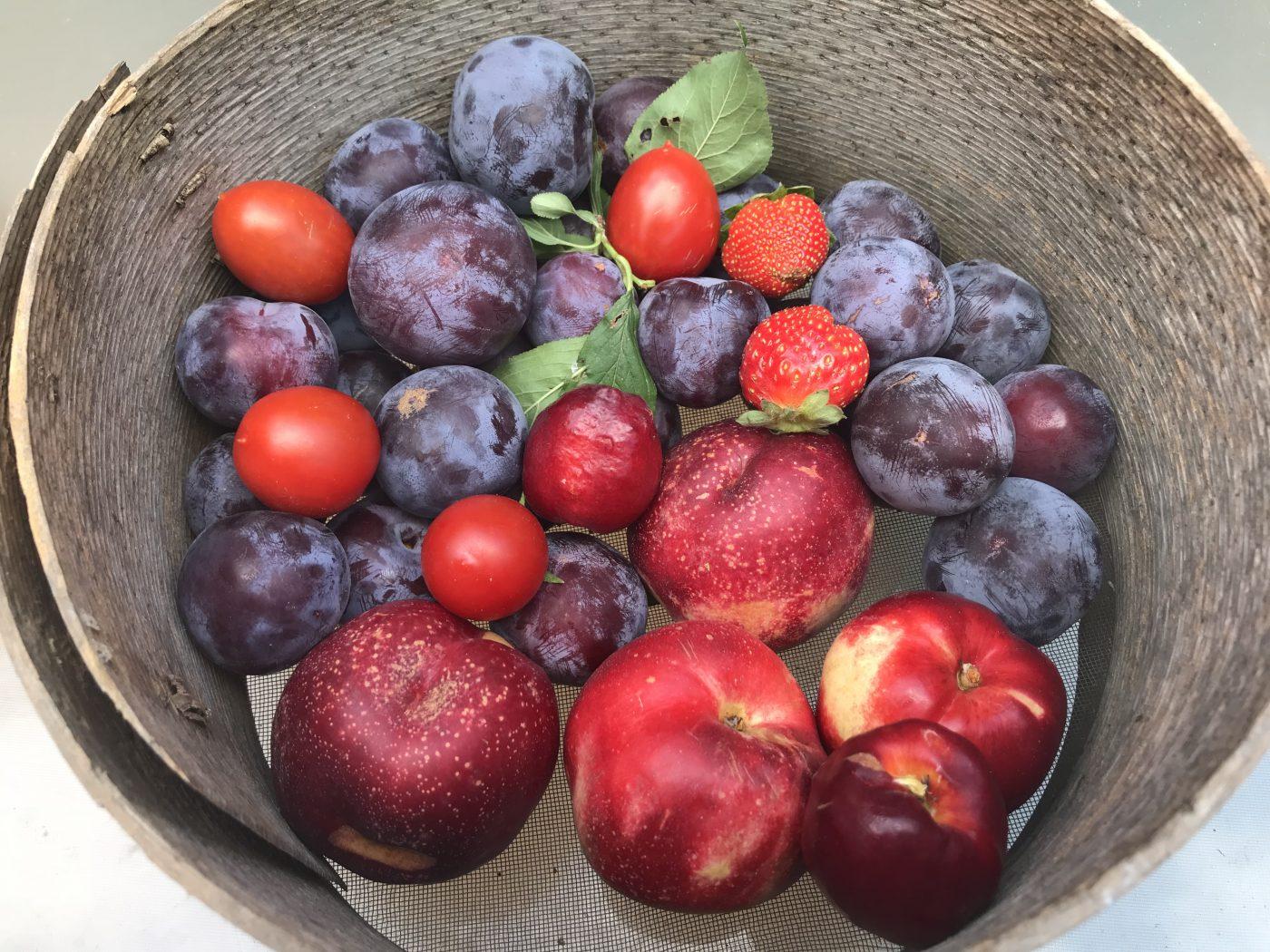 איך בוחרים פירות וירקות טריים וטובים?